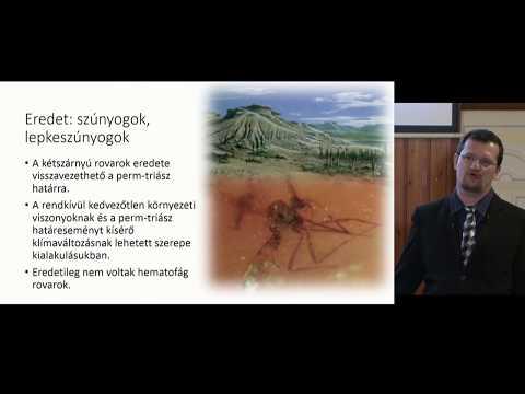 Helminták kezelése felnőtteknél videó