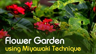 Flower Garden using Miyawaki Technique