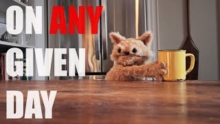 This cat is NED EP12 - On any given day