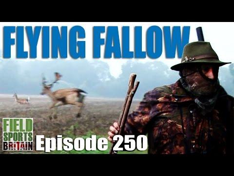 Fieldsports Britain – Flying Fallow Deer