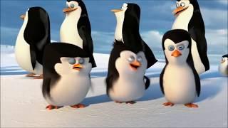Paul Mauriat   Alouette  Кадры из мультфильма Пингвины Мадагаскара