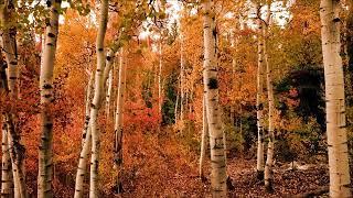 """Canção  """"O Outono Chegou"""""""