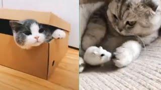 TikTok-Spécial chat-Meilleures Vidéos Drôles de Chat et de Chien 🐶🐱- Best Funny DOGS et CATS #178