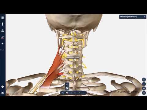 Injektionen in Osteochondrose Anweisung auf den Preis