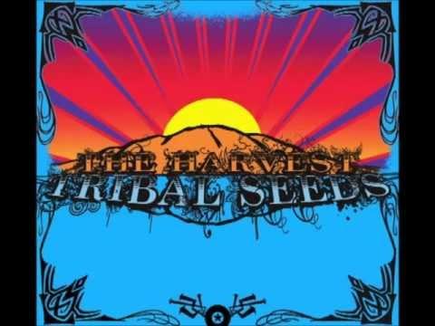 Stillness of Night - Tribal Seeds