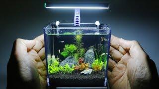 The World's Smallest Plant Aquarium #1
