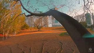 One pack inside the tree ? Fpv drone Freestyle