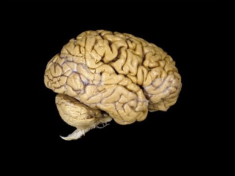 Co všechno můžete dělat bez mozku?