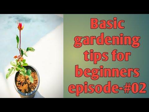 Episode #02 Basic Gardening tips for beginners | planting tips for beginners