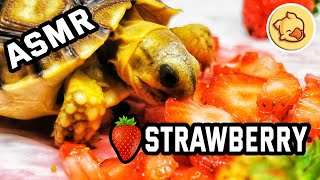 🍓 Turtle Eating Strawberries ASMR Tortoise 🐢05