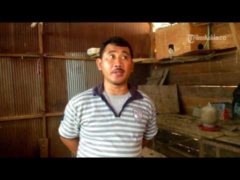 Video VIDEO PNS Ini Memiliki Kegemaran Beternak Bebek dan Merpati