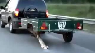 Смотреть онлайн Питерский водитель заменил колесо бревном