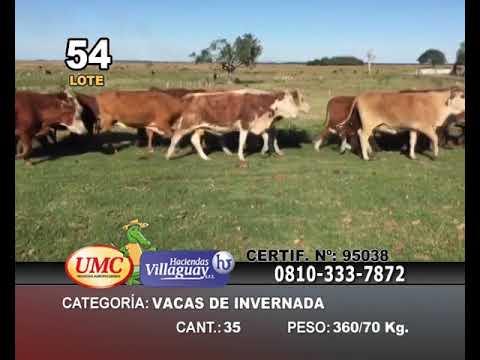 Lote 35 Vacas de invernar en Mercedes, Corrientes