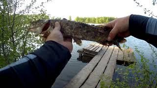 Ловля окуня в московской области