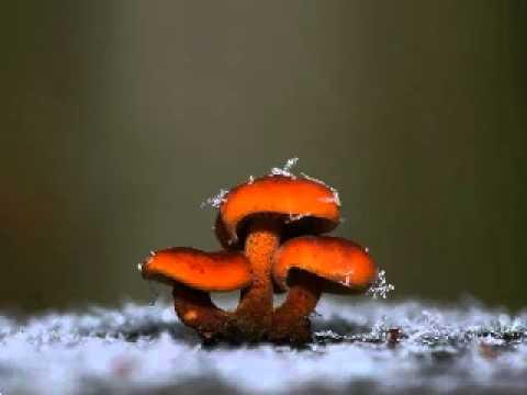 Vernici da un fungo di unghie a buon mercato