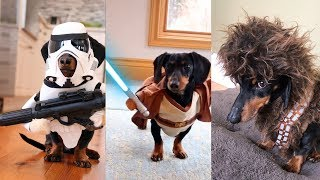 Crusoes Star Wars Dog Costumes Compilation