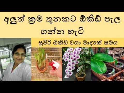 Nugasewana Orchid Wagawa 2019-09-25 | Rupavahini