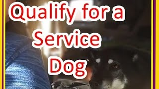 How to qualify for a service dog #5