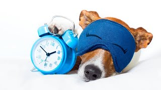 How to Make a Dog Sleep Through the Night: 7 Actionable Tips