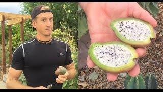 Vegan Athlete Favorite Edible Cactus - Edible Cactus Garden