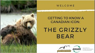 Webinar - Getting to Know a Canadian Icon: The Grizzly Bear