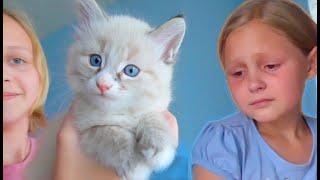 Отдаем котенка КАПУЧИНО😢 РАССТАВАНИЕ/ ЕДЕМ за КЛУБНИКОЙ на ферму / ГРУСТНОЕ ВИДЕО