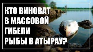 Массовый мор рыбы в Атырау. Кого пытаются прикрыть?