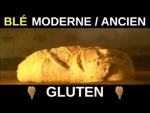 GLUTEN : blé moderne vs. blé ancien