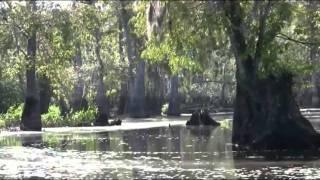 Run Through The Jungle HD Video