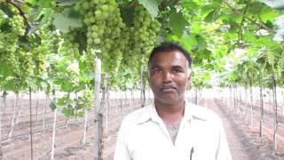 Sangli vijay gaure