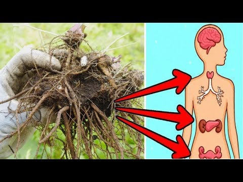 7 Incredible Benefits Of Valerian Root You Wish Someone Told You Earlier