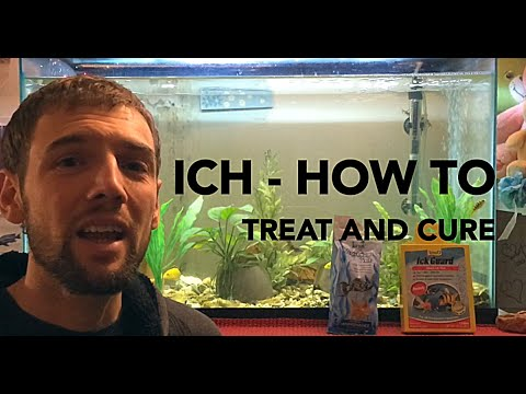 Video How to treat and Cure Ich (Ick) in an Aquarium - 4 easy steps