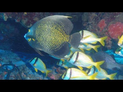 Cozumel, Mexico 2017 More Amazing Drift Diving