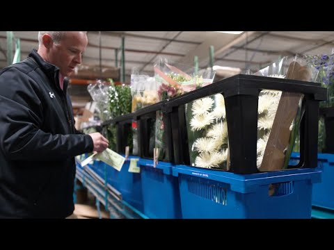 DVFlora - We Aspire To Be Our Customers' Most Valuable Supplier
