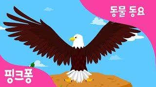 하늘의 왕자 독수리 | 독수리송 | 동물 동요 | 핑크퐁! 인기동요