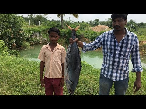 Big Fish Biryani - Cooking A Big Tuna in My Village - Cooking Tasty Fish Biryani for 100 villagers