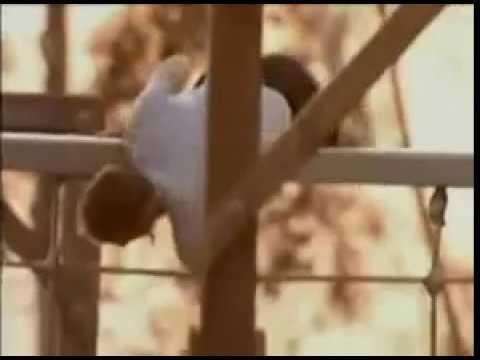Chimp vs. Navy Seal
