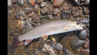 Рыбалка на реке зева приморского края