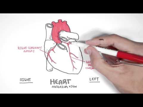 Kardiologia - naczynia wieńcowe