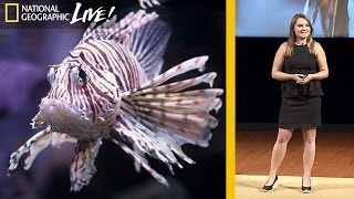 Why Lionfish Should Be Your Favorite Fish to Eat | Nat Geo Live thumbnail