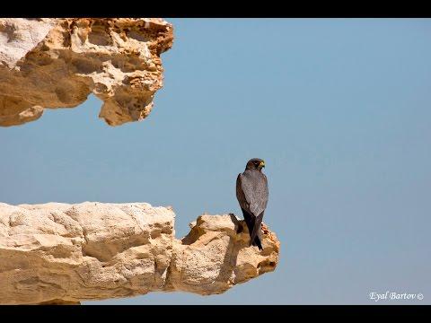 מסע בשמי הארץ עם הציפורים המדהימות שמבקרות אותנו