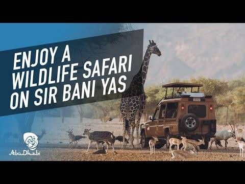Experience the call of the wild at Sir Bani Yas Island
