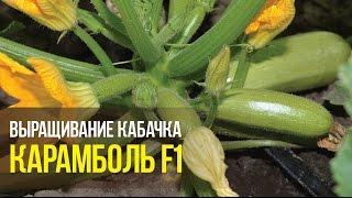 Кабачок Карамболь F1 5 шт / United Genetics от компании AgroSemka - видео