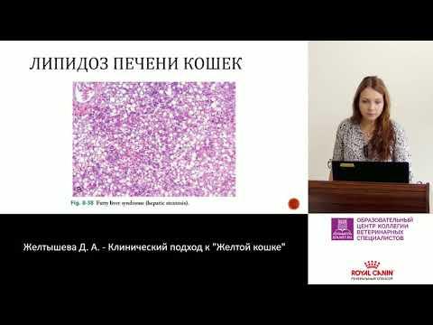 Гепатит с и лечение народными средствами