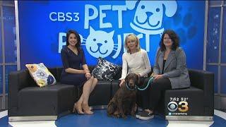 CBS 3 Pet Project: PSPCA CEO Julie Klim