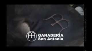 Marca Hierro Ganadería San Antonio
