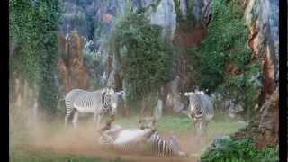 preview picture of video 'Parque de la naturaleza de Cabárceno (Cantabria)'