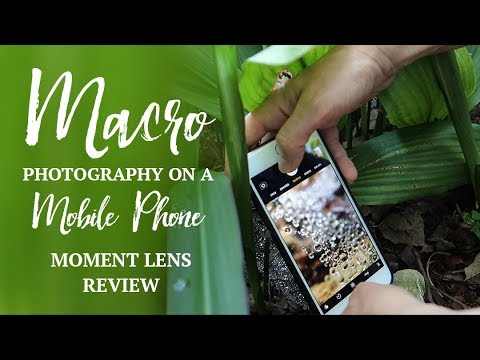Mobile Phone MACRO Photography | Moment Macro Lens Review