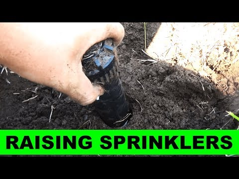 How to Raise Sprinkler Heads in your Lawn