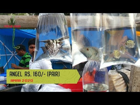 Galiff Street Cheap Aquarium Fish Market Kolkata India 17th June